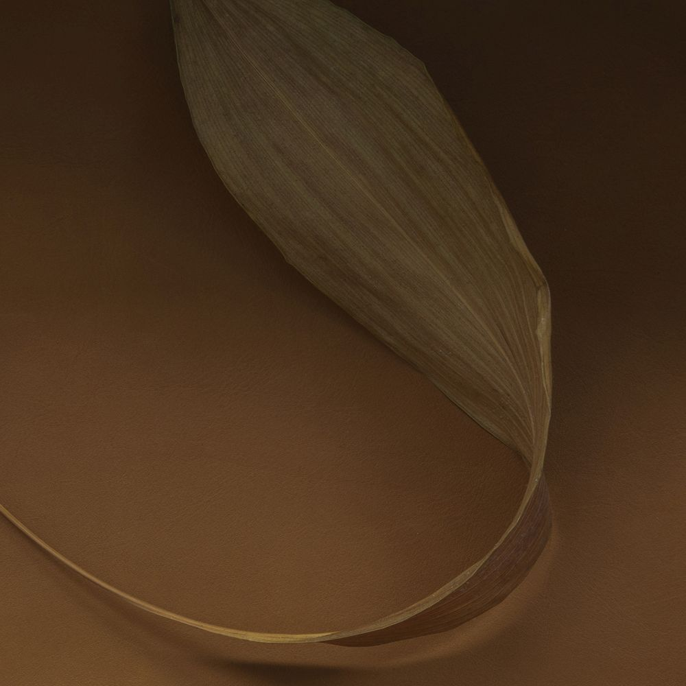 Brown leaf on top of our SHADE collection created with Norm Architects
